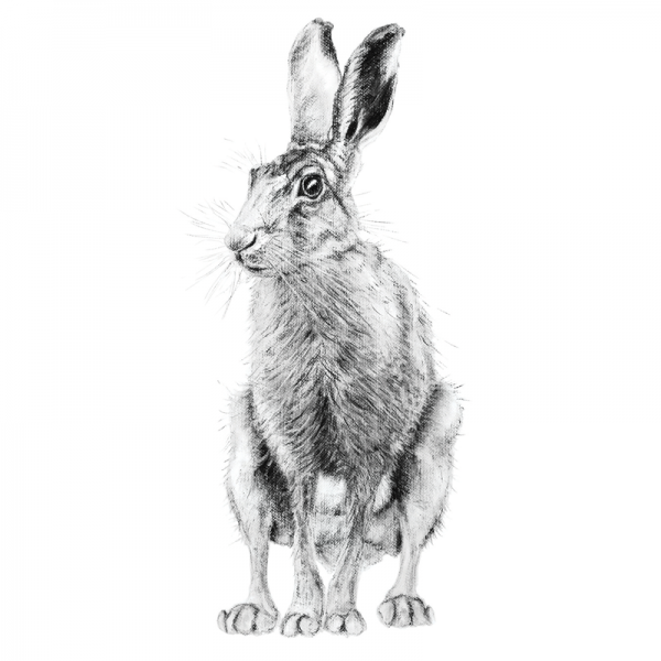 Hare 1