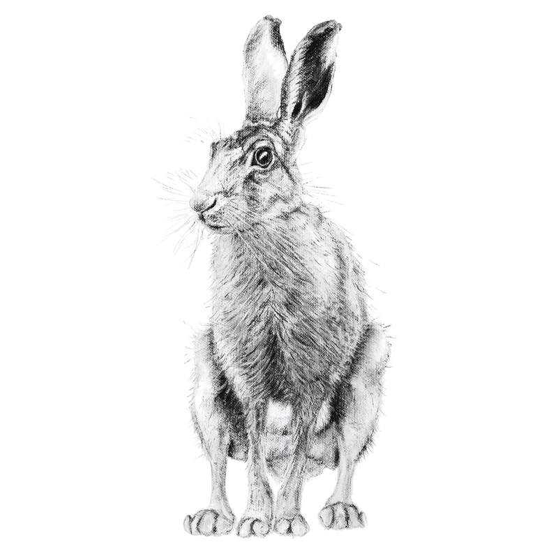 Hare 1, A5 Card, Box of hares