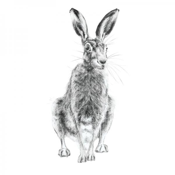Hare 10
