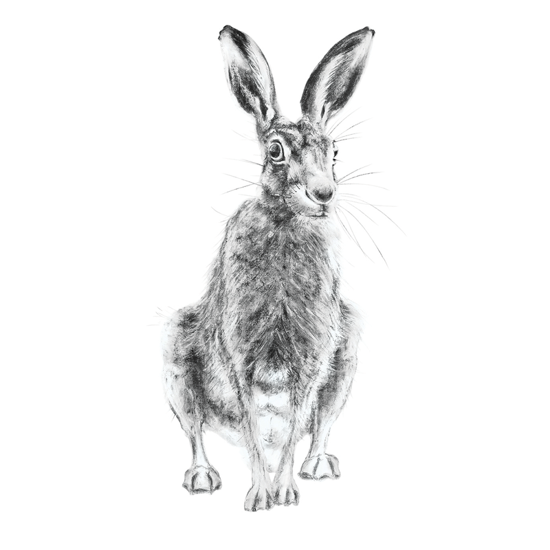 Hare 10, A5 Card, Box of hares
