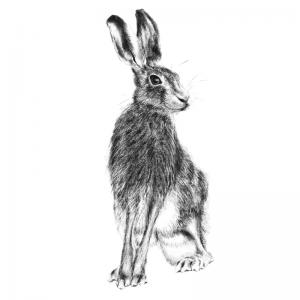 Hare 19