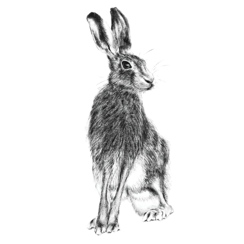 Hare 19, A5 Card, Box of hares