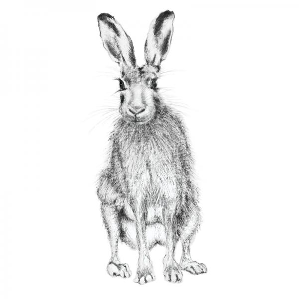 Hare 20