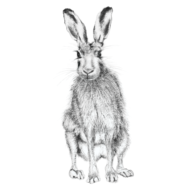 Hare 20, A5 Card, Box of hares