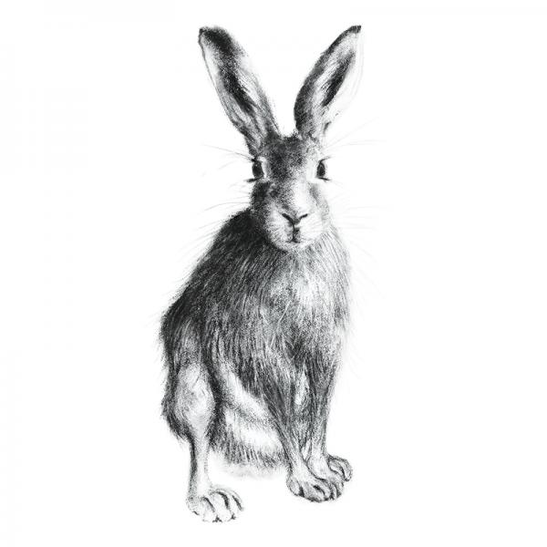 Hare 21