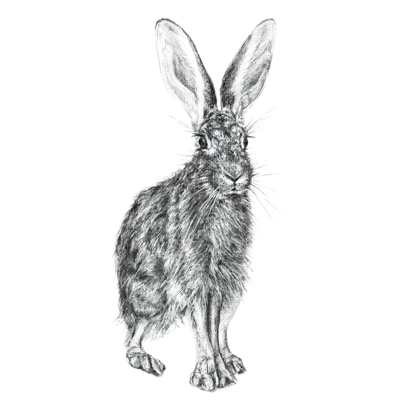 Hare 3, A5 Card, Box of hares