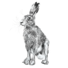 Hare 7, A5 Card, Box of hares