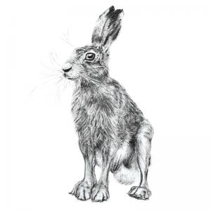 Hare 7