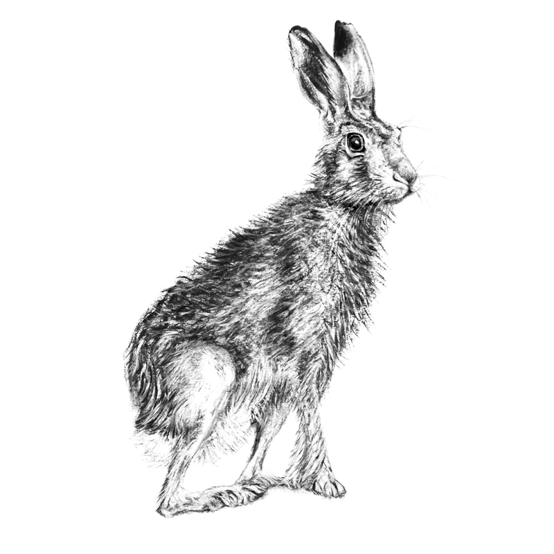 Hare 9, A5 Card, Box of hares