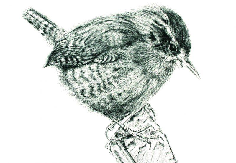 Wren, A5 Card, Box of birds
