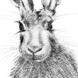 Hare 20 print