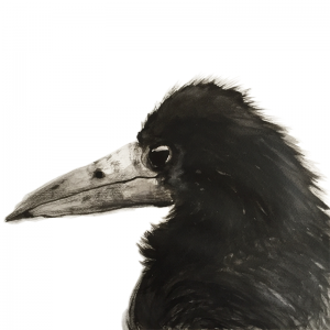 Small rook