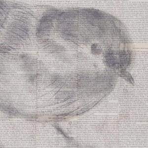 Darwin's birds 3