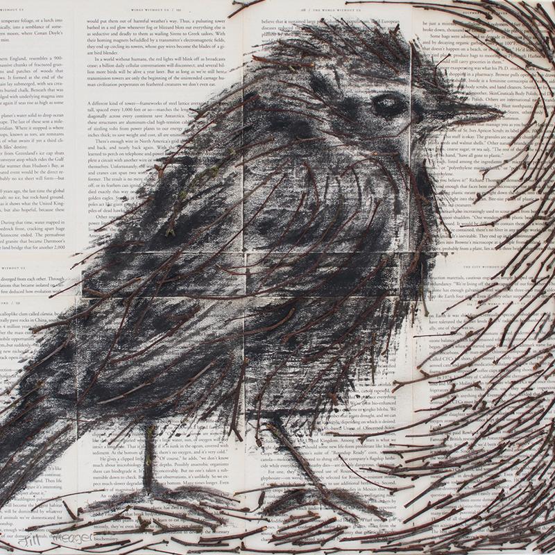 Darwin Bird 4