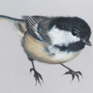 Coal tit 4 – The Jane Newbery Gallery