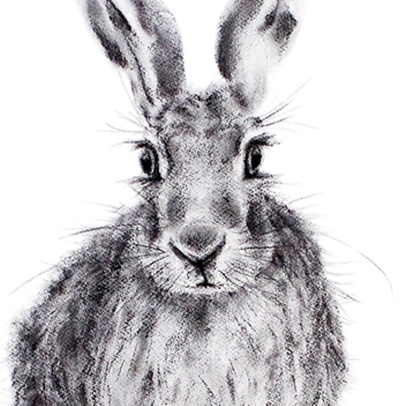Hare 23