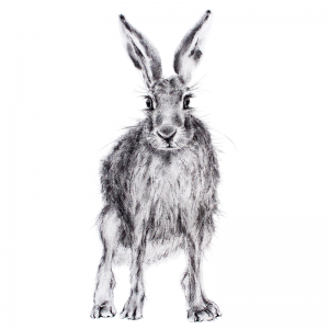 Hare 23 – Ashburn Gallery