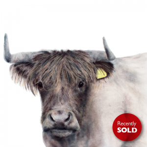 Highland Cow – just sold