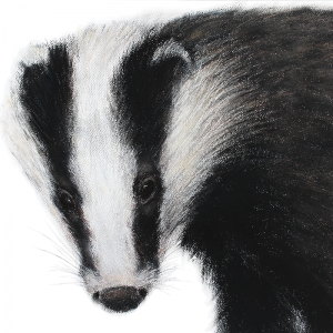Badger 5 – for sale at The Ashburn Gallery