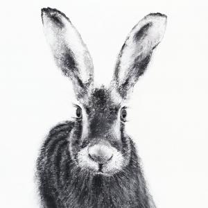 Hare 25