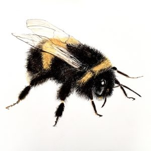 Bumble Bee – for sale at The Ashburn Gallery