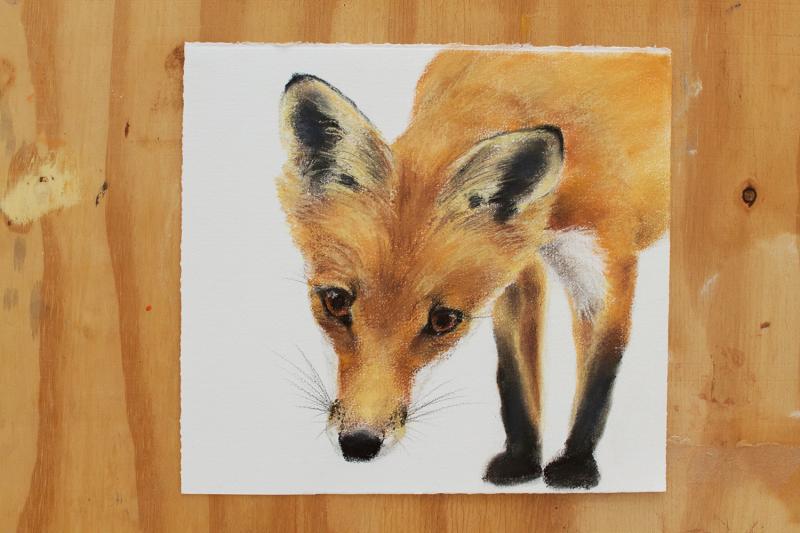 Fox cub 5 drawing