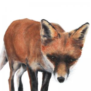 Fox cub 3