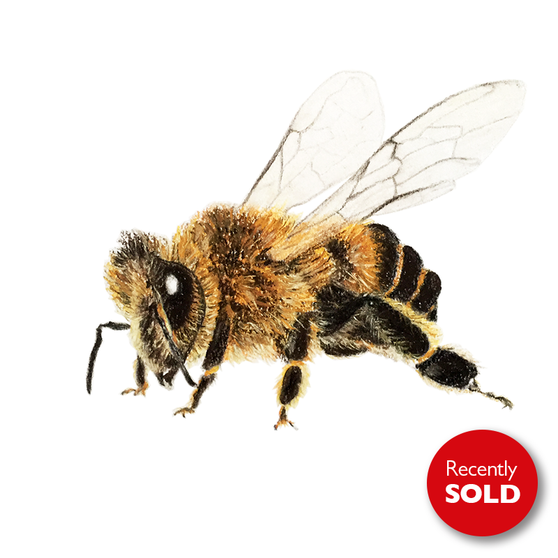 Honey bee sold