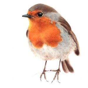 Robin 7 – SOLD