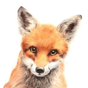 Fox cub 6 – small drawing series