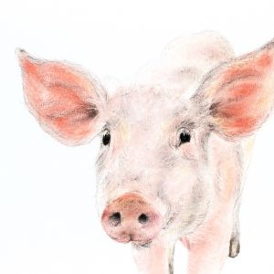 Piglet – small drawing series