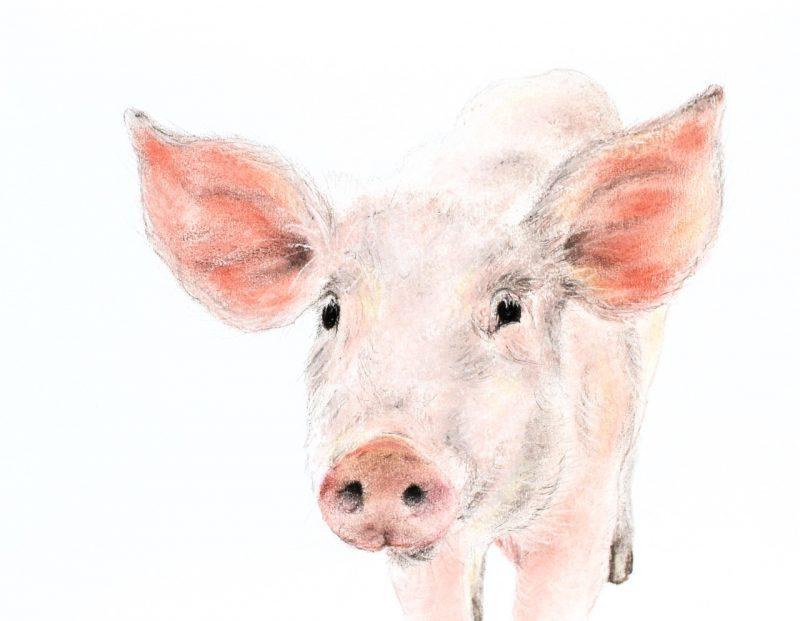 Piglet. Jill Meager artist
